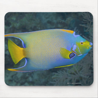 Queen Angelfish Mouse Pad