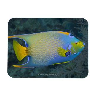 Queen Angelfish Rectangular Photo Magnet