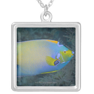 Queen Angelfish Square Pendant Necklace