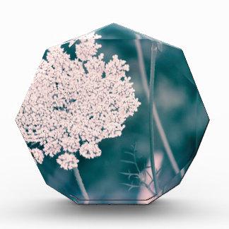 Queen Anne Lace Flower Award