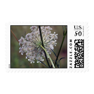 Queen Anne Lace Postage