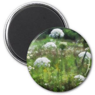 Queen Anne s Lace 2 Floral Fridge Magnets