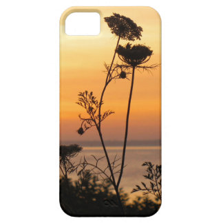 Queen Anne's Lace at Sunset - Fishers Island, NY iPhone SE/5/5s Case