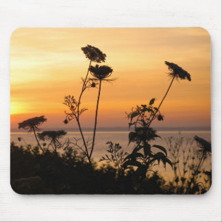 Queen Anne's Lace at Sunset - Fishers Island, NY Mousepads