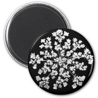Queen Anne s Lace Magnet