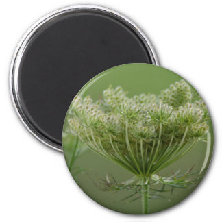 Queen Anne s Lace Magnets