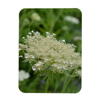 Queen Anne s Lace Rectangle Magnet