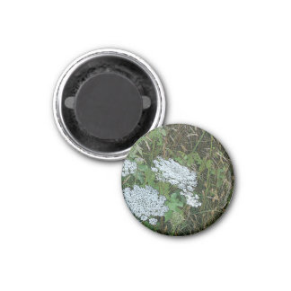 Queen Anne's Lace White Wild Flower 1 Inch Round Magnet