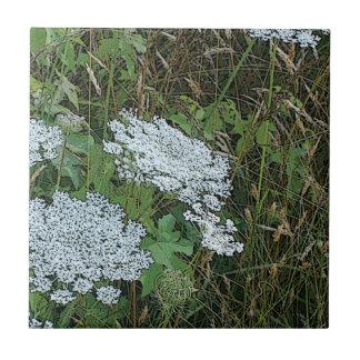 Queen Anne's Lace White Wild Flower Ceramic Tile