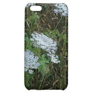 Queen Anne's Lace White Wild Flower iPhone 5C Covers