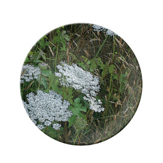 Queen Anne's Lace White Wild Flower Plate