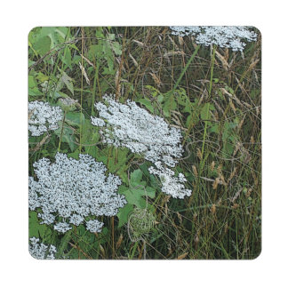 Queen Anne's Lace White Wild Flower Puzzle Coaster