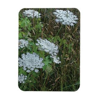 Queen Anne's Lace White Wild Flower Rectangular Photo Magnet