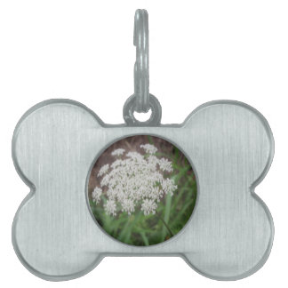 Queen Anne s Lace Wildflower Pet Tag