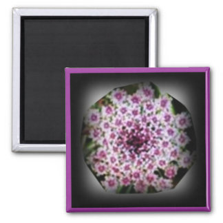 Queen Anne s Lace with red Umbella ZAZZLE magnet