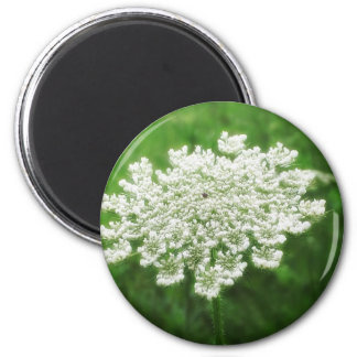 Queen Anne's Lace 1 (Wild Carrot) 2 Inch Round Magnet