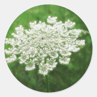 Queen Anne's Lace 1 (Wild Carrot) Classic Round Sticker