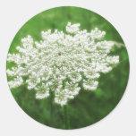Queen Anne's Lace 1 (Wild Carrot) Sticker