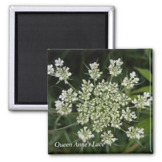 Queen Anne's Lace 2 Inch Square Magnet