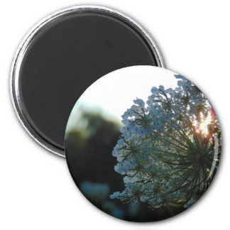 Queen Anne's Lace at Sunset Magnet