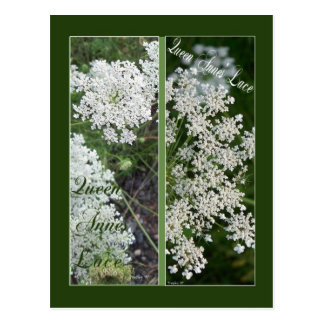 QUEEN ANNE'S LACE BOOKMARKS POSTCARD