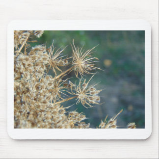 Queen Anne's Lace Close Up Mouse Pad