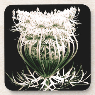 Queen Anne's Lace Coaster