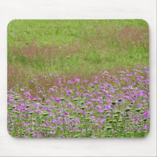 Queen Anne's Lace Daucus carota) growing Mouse Pad
