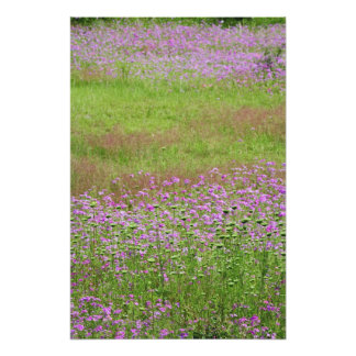 Queen Anne's Lace Daucus carota) growing Photographic Print