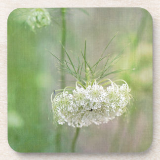 Queen Anne's Lace Drink Coaster