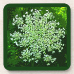 Queen Annes Lace Drink Coaster