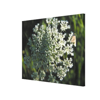 Queen Anne's Lace Flower Picture Canvas Print