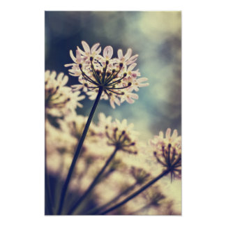 Queen Annes Lace flowers Art print