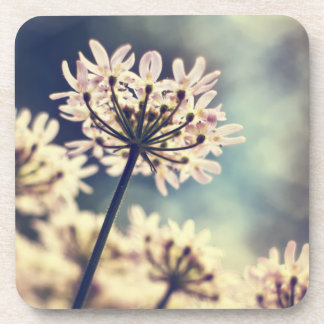 Queen Annes Lace flowers coaster set