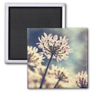 Queen Annes Lace flowers fridge magnet