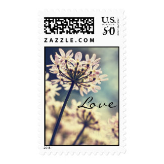 Queen Annes Lace flowers love postage stamps