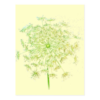 Queen Anne's Lace Gifts and Favors Postcard