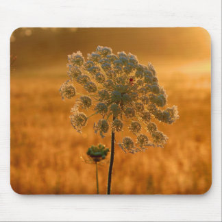 Queen Anne's Lace Greeting The Sun Mouse Pad