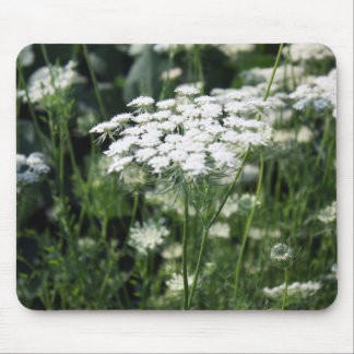 Queen Anne's Lace in a Field Mouse Pads