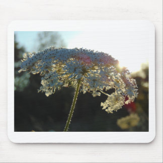 Queen Anne's Lace In Evening Mouse Pad