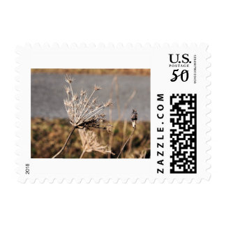 Queen Anne's Lace in the Fall Postage