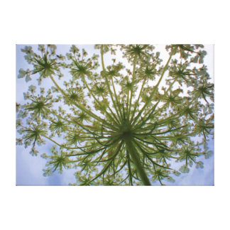 Queen Anne's Lace Looking Up Painting Canvas Gallery Wrap Canvas