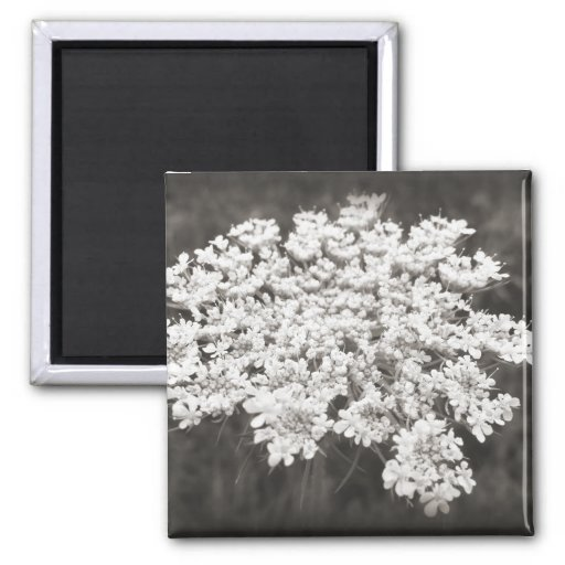 Queen Anne's Lace Magnets