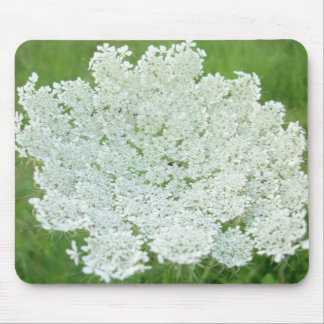 Queen Annes Lace Mouse Pad