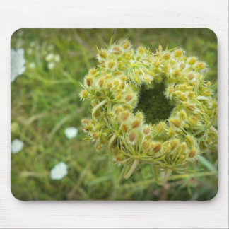 Queen Anne's Lace Photo Mouse Pads