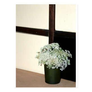 Queen Anne's Lace Post Card