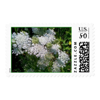 Queen Annes Lace Postage