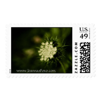 Queen Anne's Lace Postage