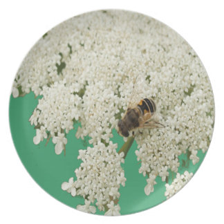 Queen Annes Lace Sage Green Dinner Plate