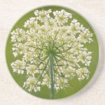 Queen Anne's Lace Sandstone Coaster